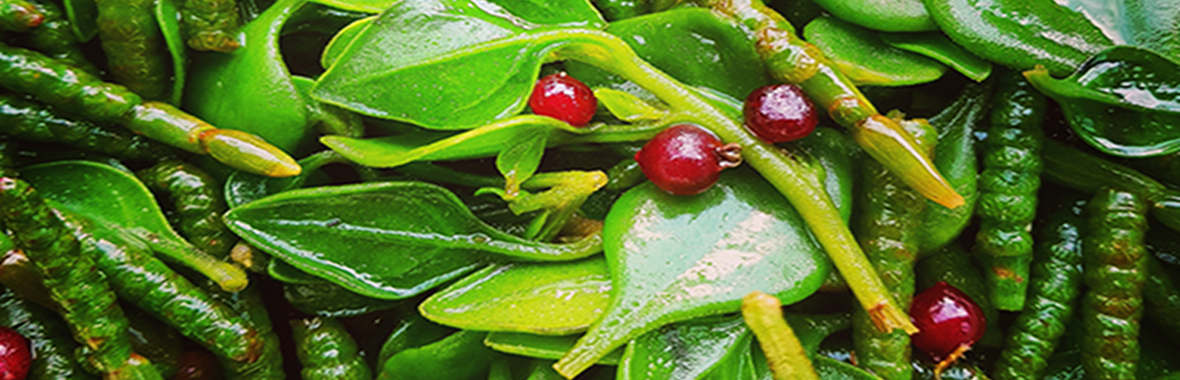 Bower spinach, Samphire & sea parsley